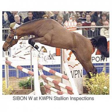 Sibon+W+%7C+Ringwood+Stud