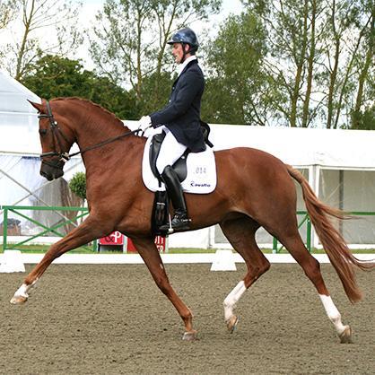 Woodlander Wild Child - UK No.1 Stallion - standing at stud