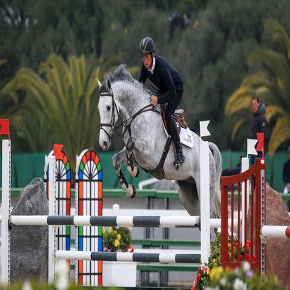 Exceptional show jumping prospect. Appoved Stallion by Clarimo