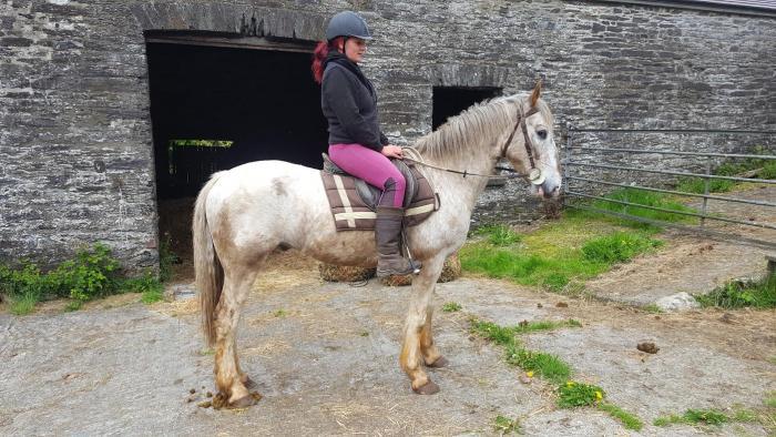 15hh 6yo Appaloosa X - potential endurance / riding club horse