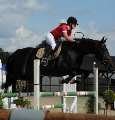 Top+Showjumper+-+future+1.40m+horse
