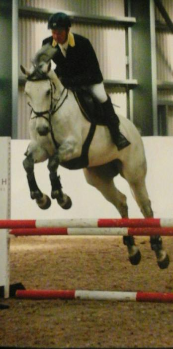 16HH BY ZIROCCO BLUE VDL Outstanding Showjumping Prospect