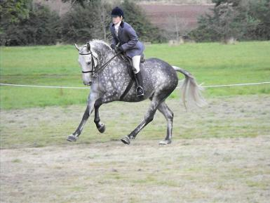 HUGE+POTENTIAL+-+Ridden+Hunter%2C+Working+Hunter%2C+competition+horse