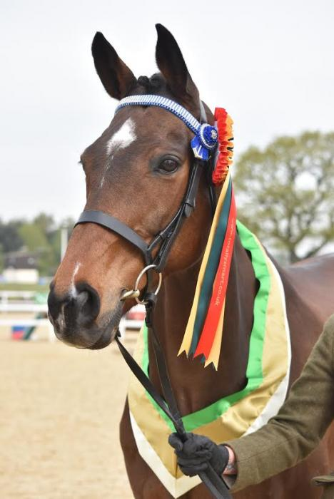 **PRICE REDUCED **ROR TB - perfect competition and family horse
